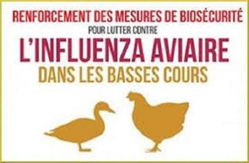 Influenza Aviaire1